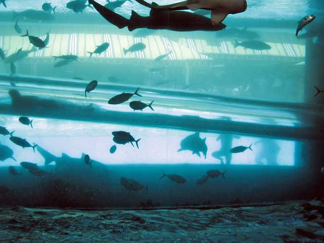 acuario y tobogán en el hotel Golden Nugget