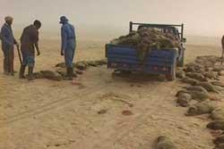 camión cargado tras la caza de focas en Namibia