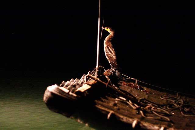 cormorán para pescar