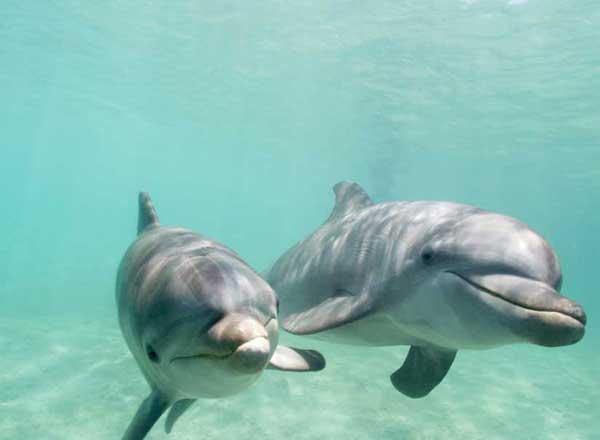 Los delfines usan matemáticas complejas