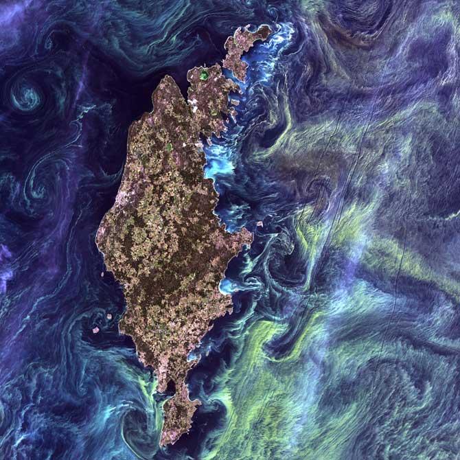 fitoplancton estilo Van Gogh