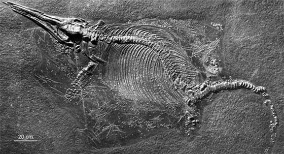 fósil de ictiosaurio
