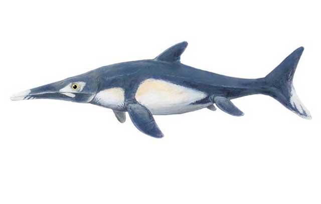 ichtiosaurio Platypterygius