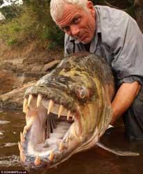 pez tigre en Monstruos del Río de Jeremy Wade