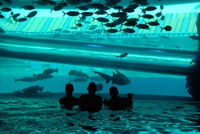 piscina del hotel Golden Nugget, Las Vegas