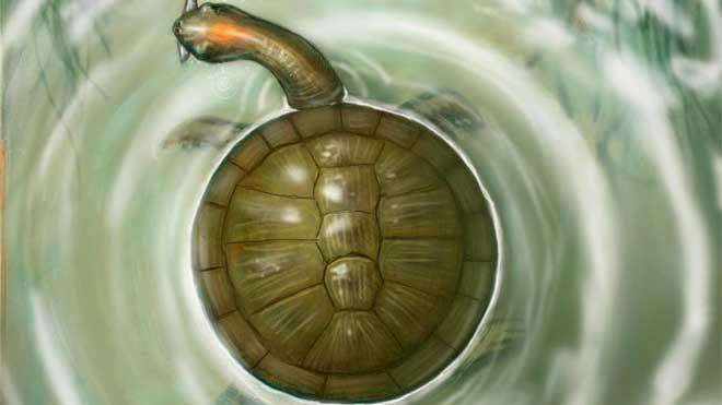 Tortuga prehistórica Puentemys mushaisaensis