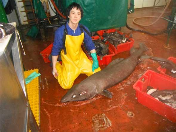 tiburón gato y Paul Clerkin