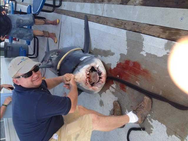tiburón mako California