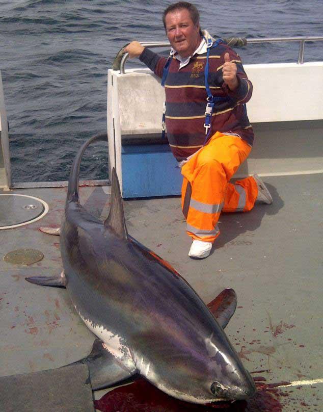 tiburón zorro giagante pescado en Cornualles