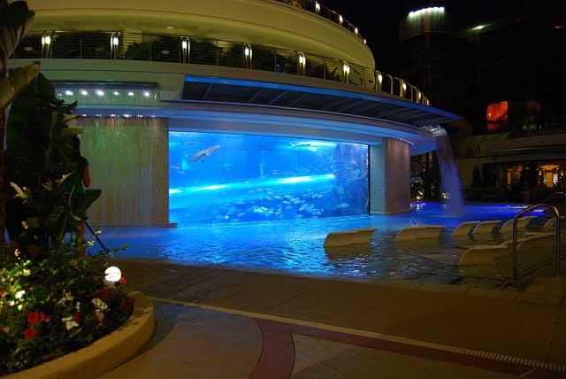 tiburones frente a la piscina del hotel Golden Nugget
