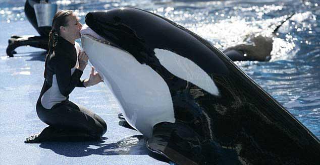 la orca Tilikum y Dawn Brancheau