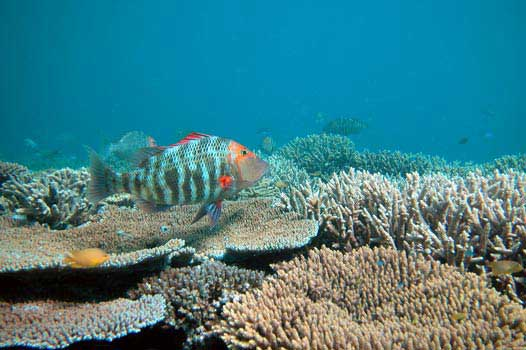 acidificación en un arrecife