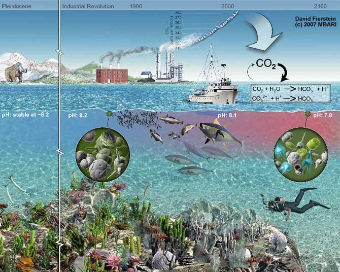 consecuencias del aumento de la acidificación de los oceanos