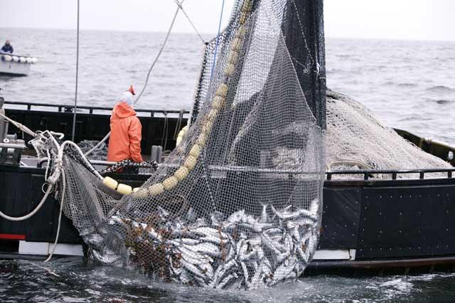 barco pesquero recoge la red