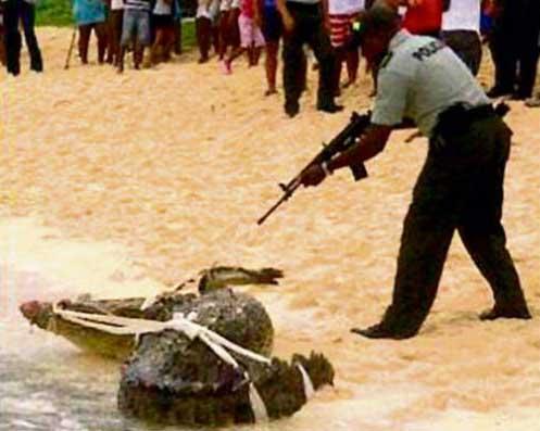 cocodrilo es sacrificado en la Isla San Andrés, Colombia