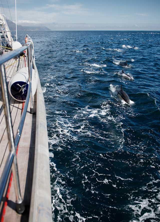 encuentro con súper manada de delfines