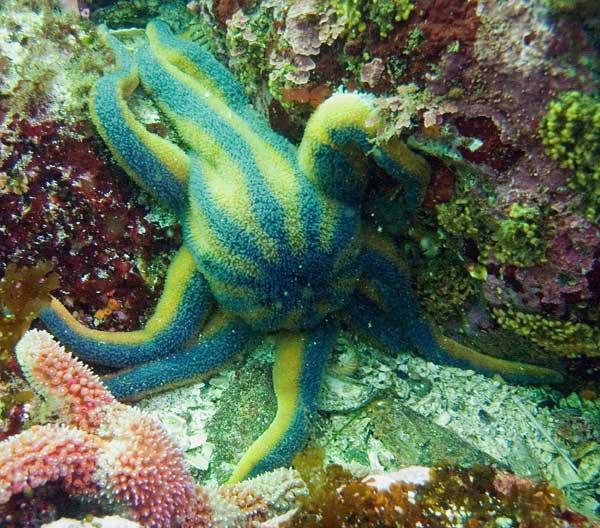 estrella de mar despojada