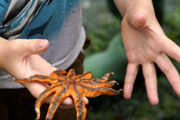estrella de mar en la mano