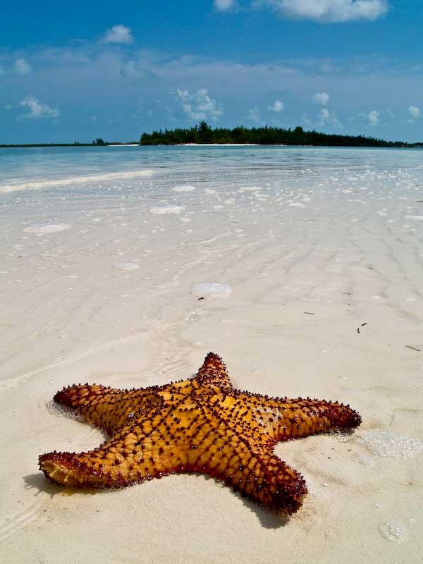 estrella de mar en una playa