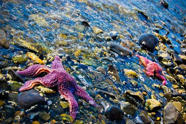 estrellas de mar entre piedras