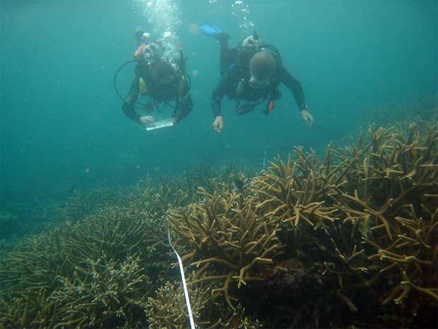 estudiando la Gran Barrera de coral