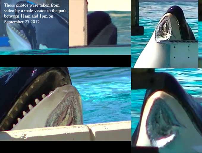 heridas de la orca Nakai