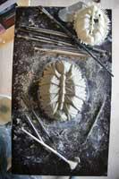 impresión en 3D del molusco Protobalanus spinicoronatus