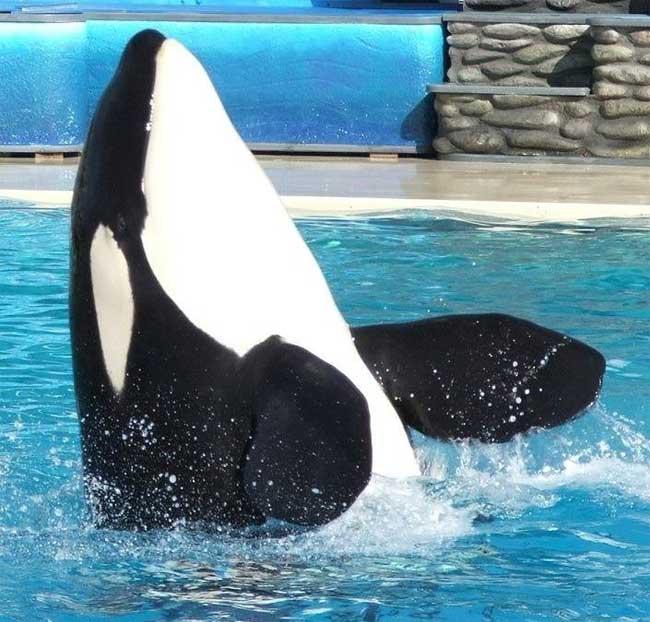 orca Nakai en SeaWorld