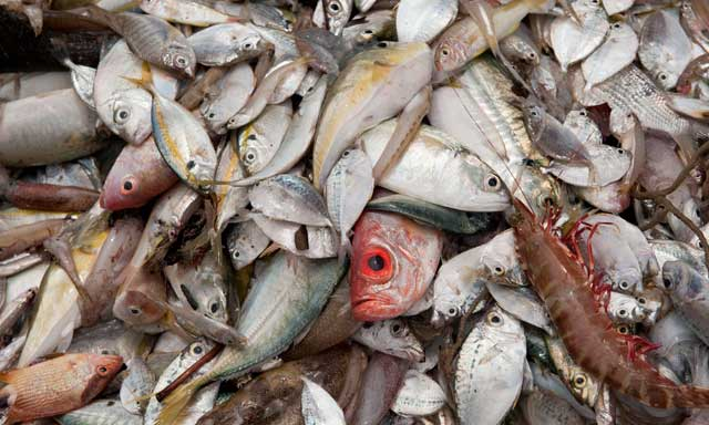 pescado de lujo en China
