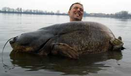 pez gato gigante