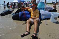 voluntarios ayudan a las ballenas piloto varadas en Florida