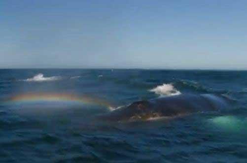 ballena hace un arco iris al respirar