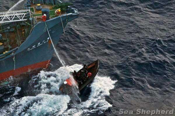 ballenero japonés es obstaculizado por Sea Shepherd