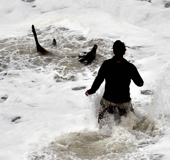 ciervo rescatado de la resaca en una playa de Nueva Jersey