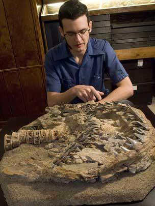 Dana Ehret, explica un fósil de Carcharodon hubbelli