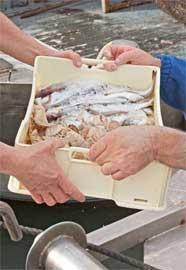 desembarque de una caja de pescado
