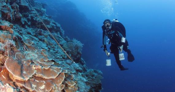 estudio de corales de profundidad en Queensland