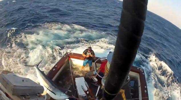 marlín salta dentro de un barco