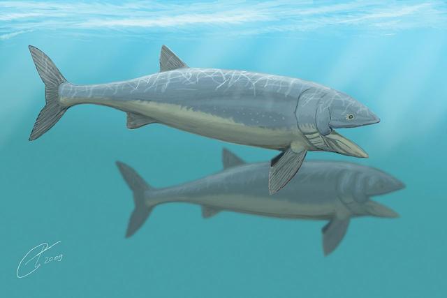 pareja de Leedsichthys