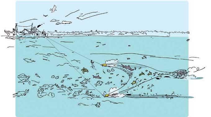 pesca de arrastre, ilustración