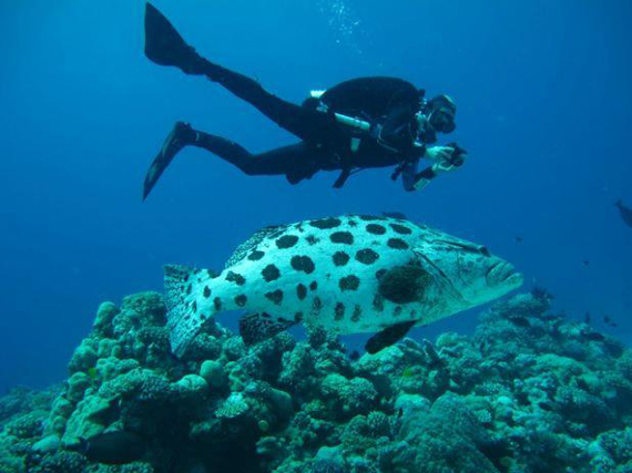pez de arrecife