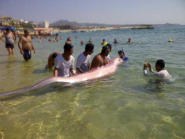 pez remo en una playa de México
