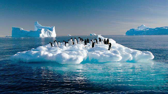 pingüinos en el hielo marino de la Antártida