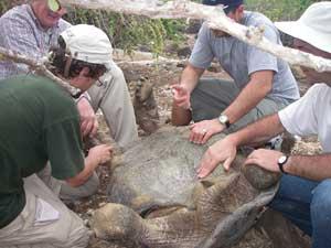 recogida de muestras de ADN de tortugas de Gálapagos