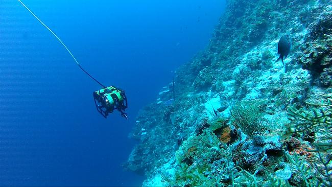 ROV estudiando corales de aguas profundas