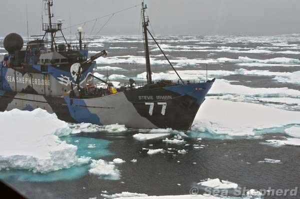 Sea Shepherd, barco Steve Irwin
