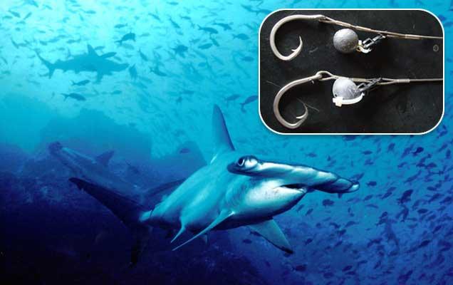 anzuelos para evitar captura del tiburón martillo