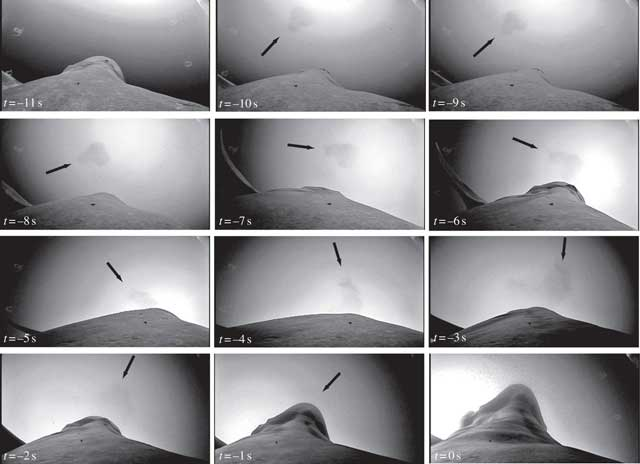 crittercam del giro de 360 grados de la ballena azul