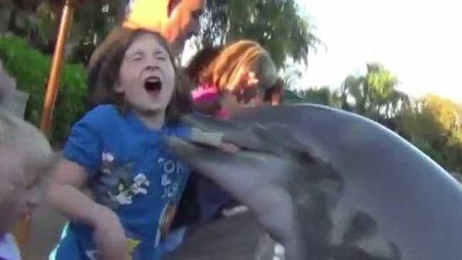 delfín muerde la mano de niña en SeaWorld