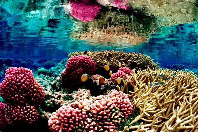 ecosistema sano de arrecifes de coral